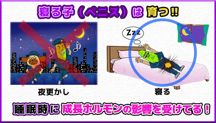 ペニスは就寝中の成長ホルモンの影響で成長するの図