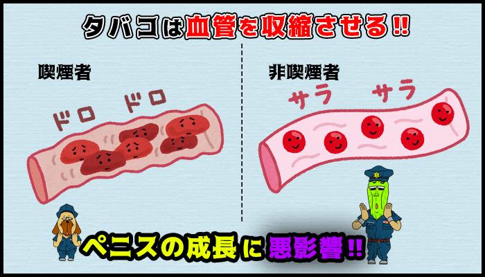 喫煙は血管を収縮し血流がわるくなるのでペニスの成長を妨げるの図