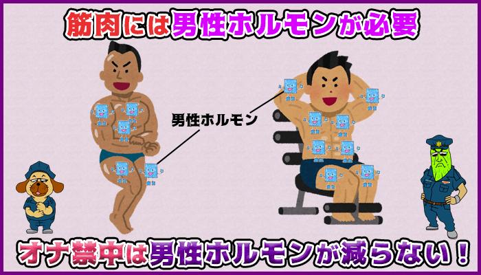 オナ禁すると男性ホルモンが減らないので筋肉が付きやすいの図