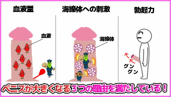 チントレがペニスに与える効果の図