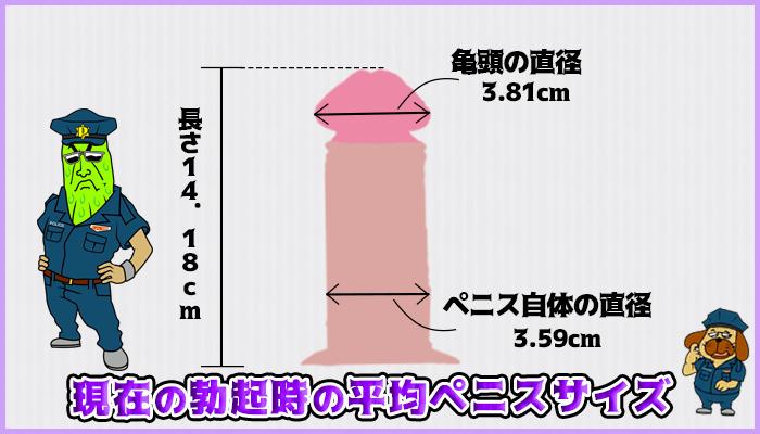 日本人の勃起時の平均サイズの図