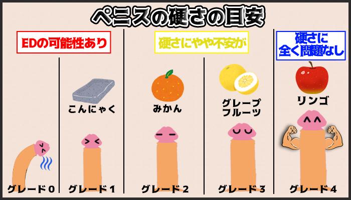 ペニスの硬さの基準の図