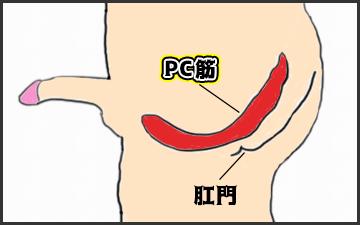PC筋の場所を説明している図