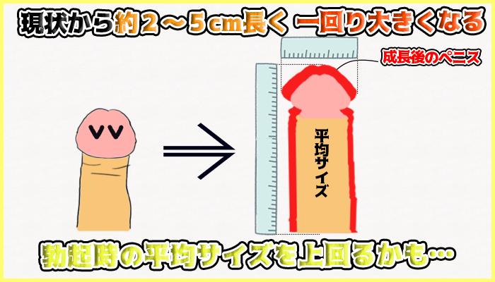ペニス増大サプリを飲めば一回りは大きくなるの図